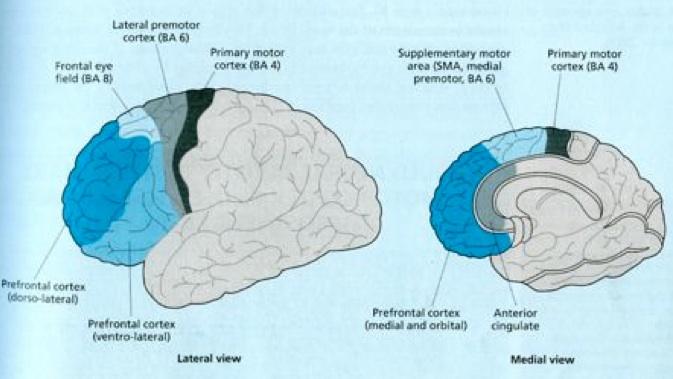 Notes: Cognition 1