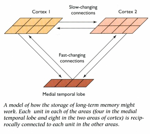 the consolidation of memory on human How long-term memory is formed is not well understood, and remains a central question of inquiry in neuroscience now researchers report they may have an answer to this question.