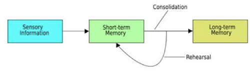 the consolidation of memory on human Hence the use of animal models in the analysis of human memory consolidation consolidation of memory 59 reactivation and then given brain lesions sometime.