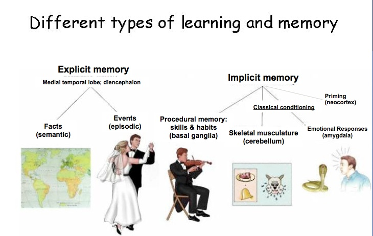 memory classifications
