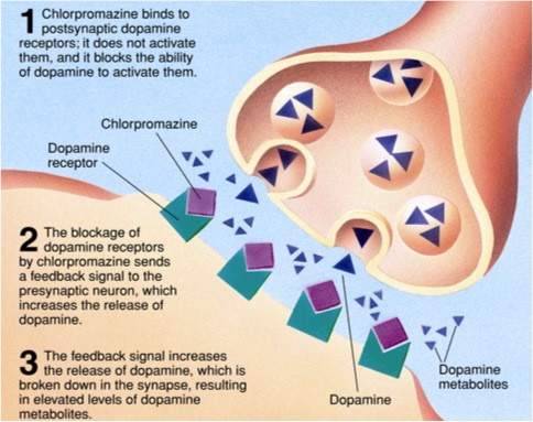 Schizophrenia pathophysiology