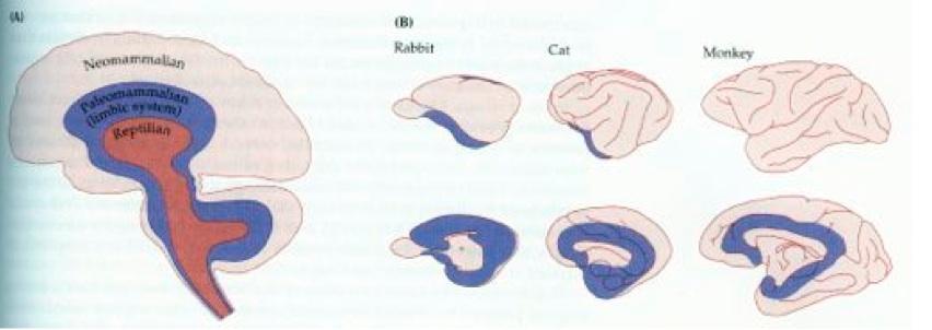 Notes: Cognition 3 - Motivation / Emotion Limbic System System
